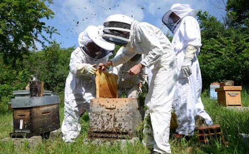 Formation en apiculture : durée et cout de la formation